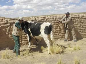 Desde el 2011 el número de focos en la región andina ha caído considerablemente.