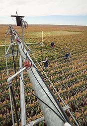 Investigadores del ARS están ayudando a los agricultores a derivar el máximo beneficio del agua para riego con la conexión de una variedad amplia de sensores a los sistemas del riego de tasa variable para entregar solamente la cantidad necesaria de agua a los cultivos.