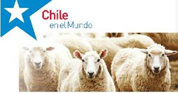 chile_ovejas