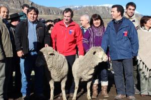cruzat ovejero 2