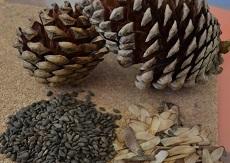 Las iniciativas se centrarán en la creación de un medicamento para el control de la obesidad y de un preservante natural para la madera, de manera de evitar ataques por hongos e insectos