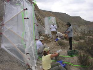 El equipo de investigación de la Universidad de Almería durante un experimento de lluvia artificial sobre costras /Fundación Descubre