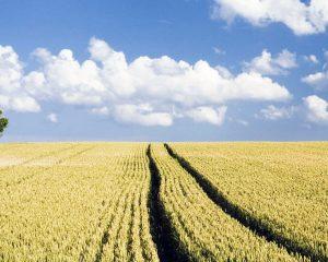foto-campo-de-arado-agricola-954656