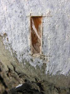 Un-hongo-colocado-en-olivares-a-modo-de-aposito-los-protege-frente-a-las-plagas_image_380