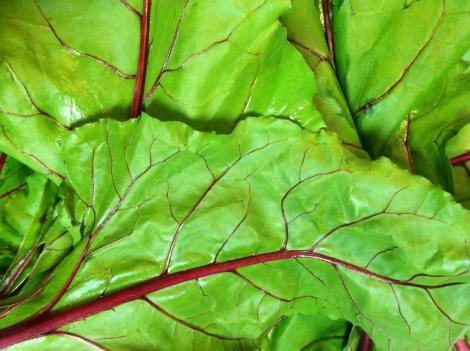 beet leaves MGD©