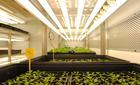 Descubren-como-aumentar-la-longevidad-de-las-semillas-de-las-plantas_image140_85