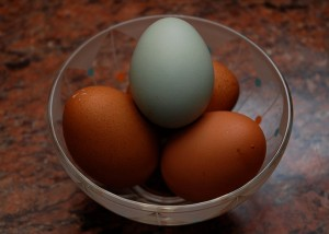 huevo-de-gallina-araucana